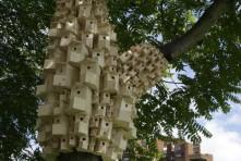 Casas para aves en parques urbanos Londres